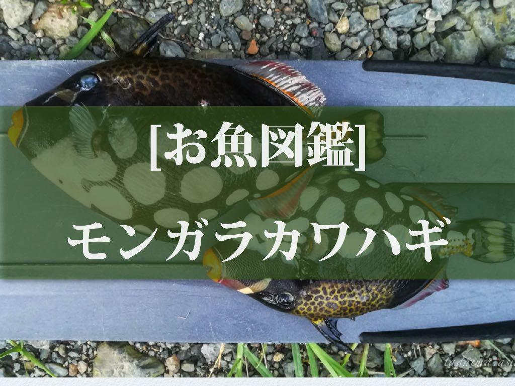 あつもり 魚 図鑑